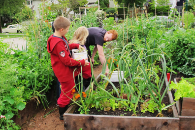 Students with Chef Stuart of Tacofino transplant beans into garden. Photo by Trish Liao.