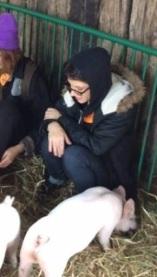 derrian pigs